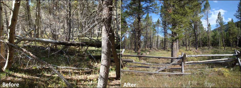Aspen Regeneration - Before & After